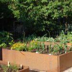 Trädgårds i behållare och baljor