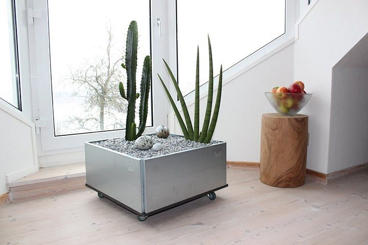 kaktus i Mobile odlingslåda