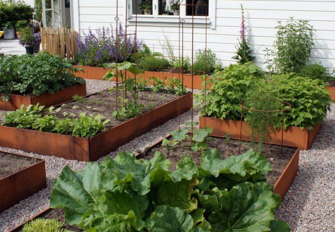 Stora avlånga och kvadratiska odlingslådor i köksträdgården