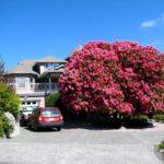 Rhododendron - maj drottningen