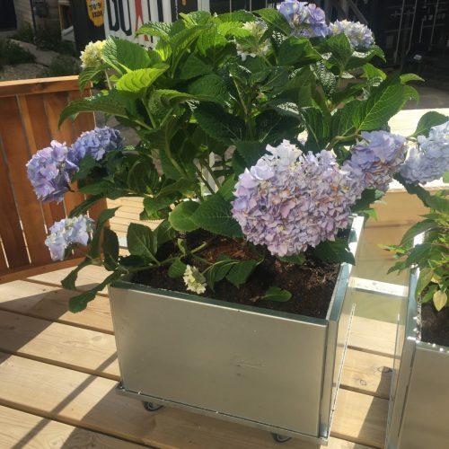 Balkonglåda kvadratisk från Land Garden