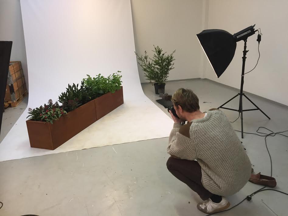 Växt Kummer